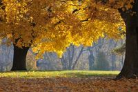 1172054_autumn_light