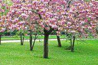 991468_spring_trees